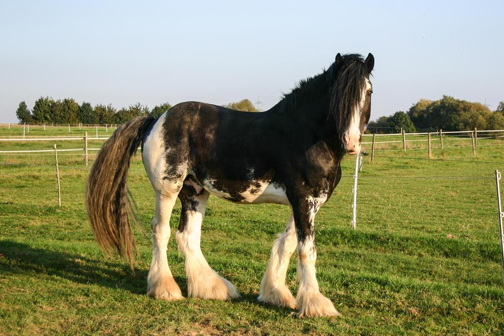 Paint Trail Horses For Sale