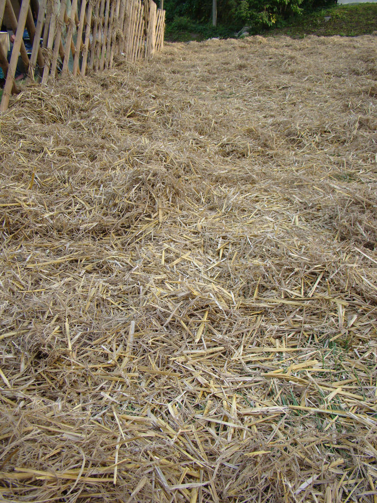 Straw Bedding For Dog House Bails
