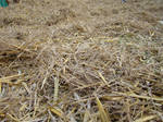 Straw and Hay II