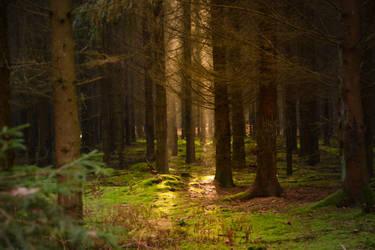 Enchanted Autuum Forest