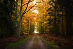 Enchanted Autuum Forest Path 02