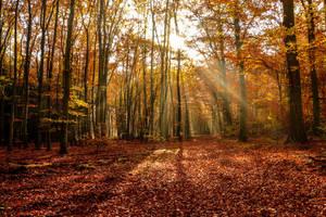 Enchanted Autuum Forest 03