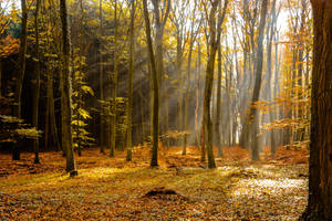 Enchanted Forest 04 by LuDa-Stock