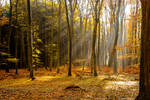 Enchanted Forest 04