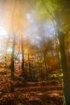 Enchanted Autuum Forest 05