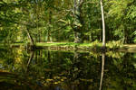 Enchanted Forest Lake - Summerly 02