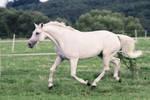 Pegasus Pose Series 1