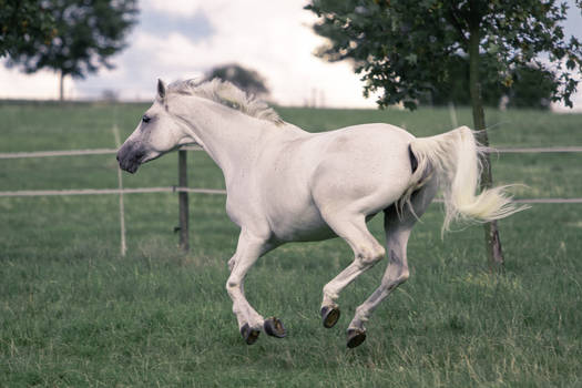 Pegasus Pose Series 6