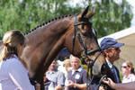 Irish Sport Horse Mighty Nice