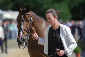 Bay Irish Sport Horse Head Portrait by LuDa-Stock