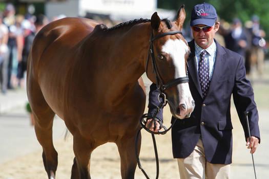 Selle Francais Wide Blaze Horse Inspection IV