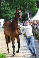Hanoverian VetCheck - Im so excited! by LuDa-Stock