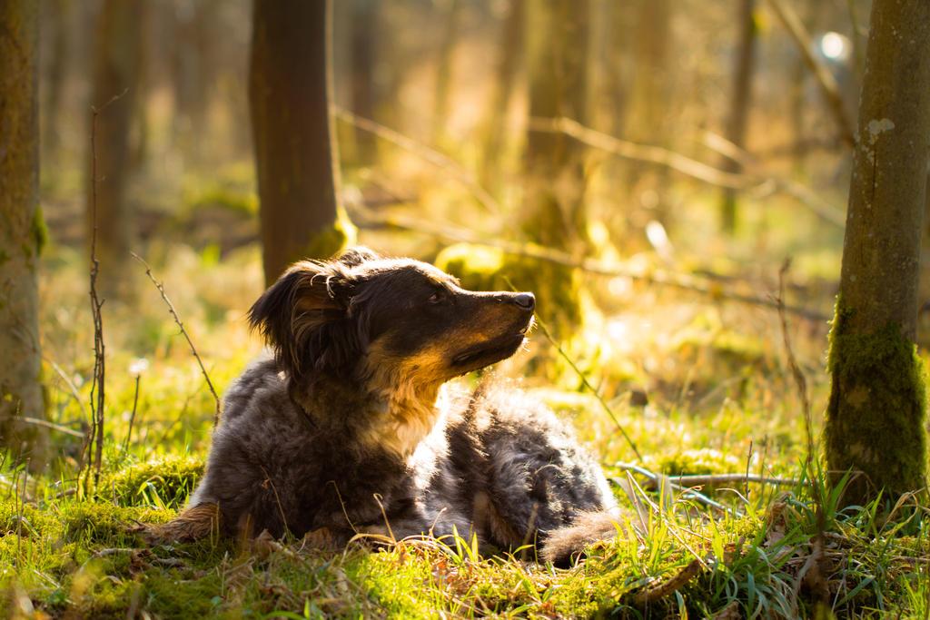 J Moss Dog Training