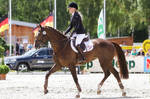 3DE Show Jumping Phase Stock 149