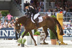 3DE Show Jumping Phase Stock 137 - Stretchin Down