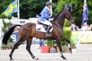 3DE Show Jumping Phase Stock 119 Cantering by LuDa-Stock