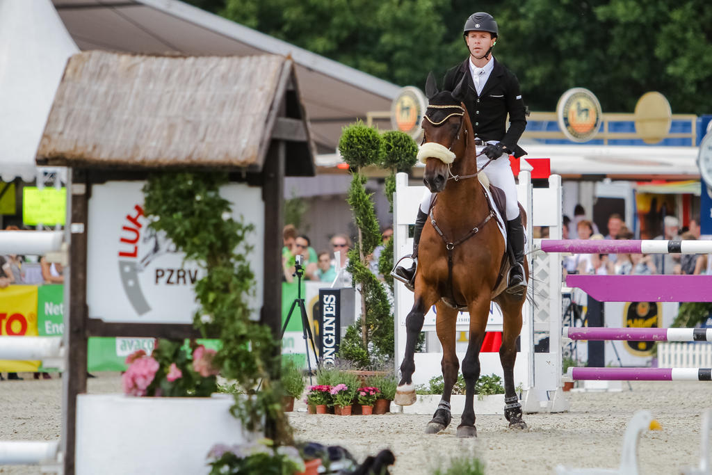 3DE Show Jumping Phase Bitless Stock 44 by LuDa-Stock