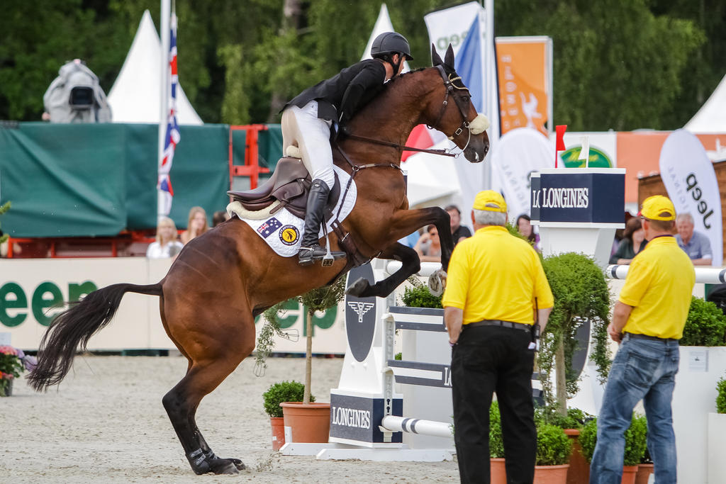 3DE Show Jumping Phase Bitless Stock 43 by LuDa-Stock