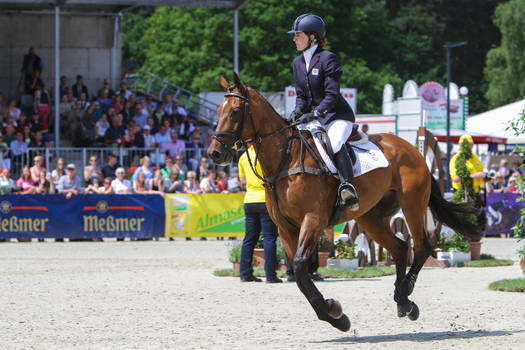 Irish Sport Horse Show Jumping