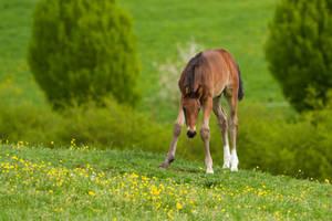 Little 'Donkey' Warmblood Foal Stock 1 by LuDa-Stock