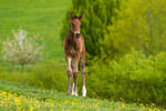 Little 'Donkey' Warmblood Foal Stock 6