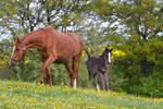 WB Foal and Broodmare Stock