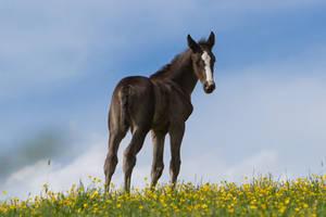 WB Foal Turning Head Stock