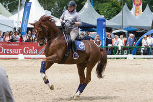 Chestnut Warmblood Lead Change Flying Change Stock by LuDa-Stock