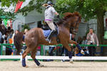 Chestnut Warmblood Lead Change Flying Change Stock