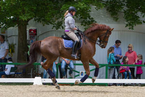 Chestnut WB  Canter Dressage Training by LuDa-Stock