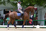 Chestnut Uphill Trot High Tension