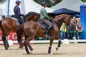Chestnut Warmblood Piaffe by LuDa-Stock