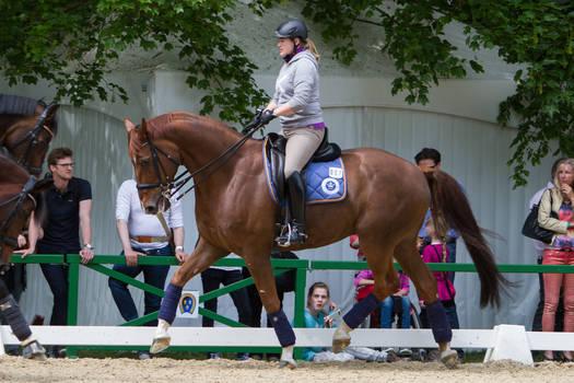 Chestnut Dressage Horse Nice Trot