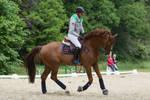 Chestnut Horse Warmup Training Scenes
