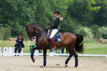 Lusitano Dressage Training Collected Trot Stock