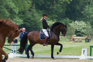 Lusitano Dressage Training Trot Trotting Stock by LuDa-Stock