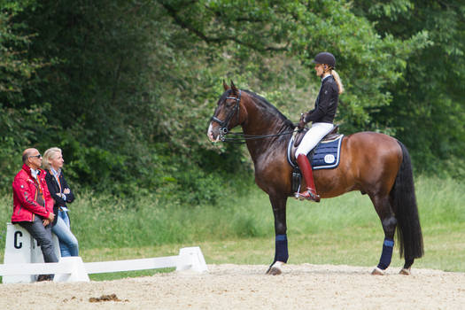 Getting Adivce from the Trainer Lusitano Dressage by LuDa-Stock