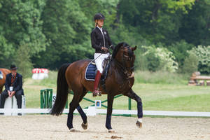 Lusitano Dressage Training Passage Stock by LuDa-Stock