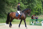 Lusitano Collected Walk Stock