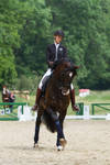 Lusitano Dressage Training Trot Half-Pass Stock