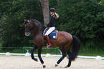 Lusitano Dressage Training Canter Pirouette Stock