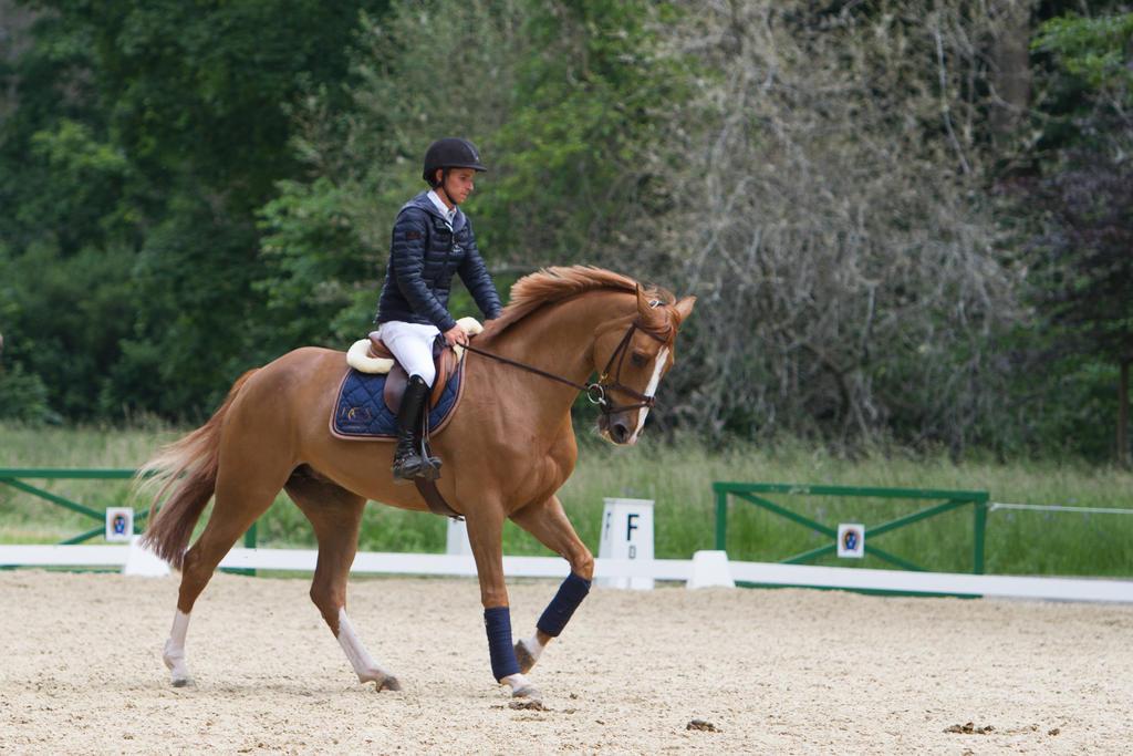 Chestnut Horse Jumping - photo#23