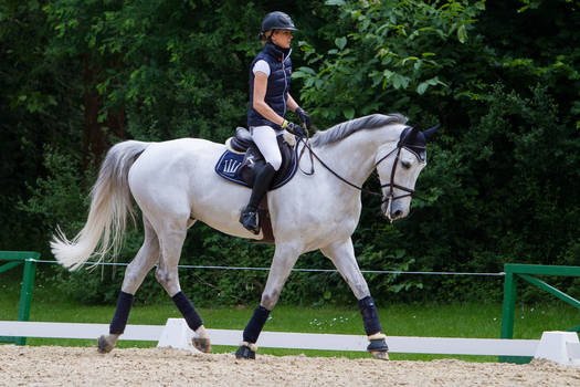Grey Horse Warmup for Showjumping