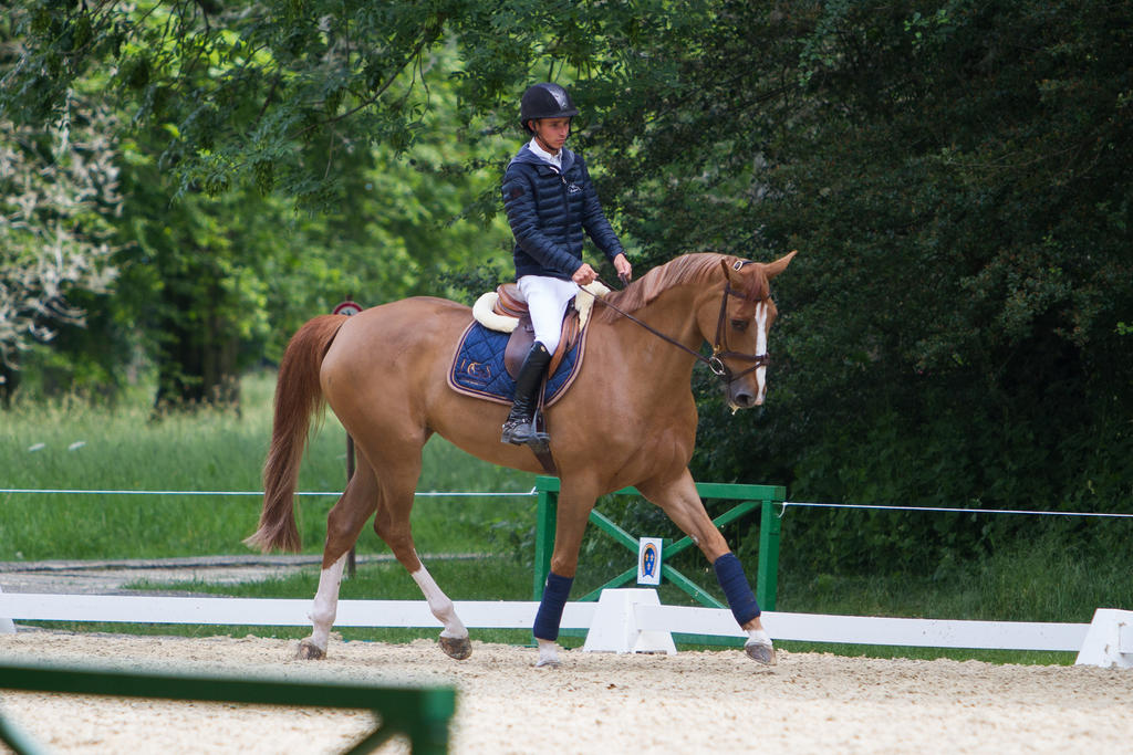 Chestnut Horse Warmup for ShowJumping by LuDa-Stock on ... - photo#13