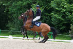 Horse Bolting Disobedience Prep Arena 4