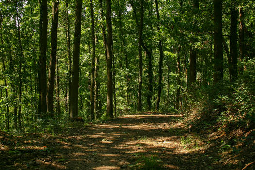 Forest Paths 14