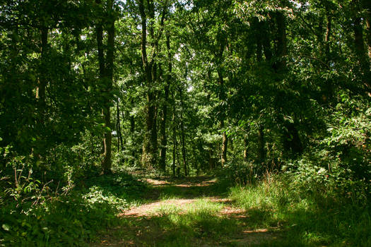 Forest Paths 13