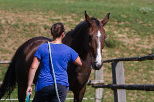 Catching Mare on Pasture