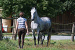 Beautiful Dappled Grey Mare on Paddock 1