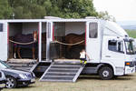 Horse Trailer Loading Handling Preparation Stock28